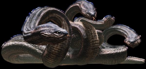 Dragon's Dogma Hidra_-_Dragon%27s_Dogma